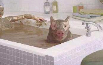 varken-in-bad